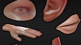 Modelowanie elementów ludzkiej anatomii - szkolenie poświęcone modelowaniu trudnych obiektów w Blenderze